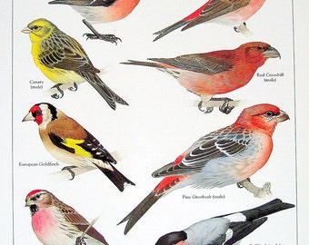 Bird Print Chaffinch, Purple Finch, Canary 1980s Book Plate 1984