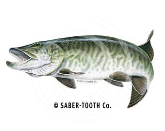 Tiger Musky Fish Decal Sticker