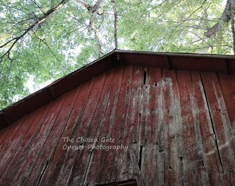 Barn with Leaves