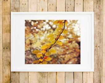 Autumn leaves wall art, autumn fine art photography, autumn home decor, autumnal art, autumn photography, autumn print, autumnal wall art
