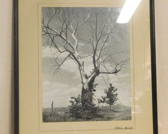 Dramatic tree, black and white photo from the 1930's, signed by artist