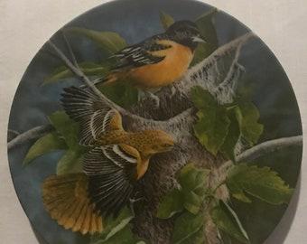 The Baltimore Oriole - Encyclopedia Britannica's Birds of Your Garden collection.  Plate #85M