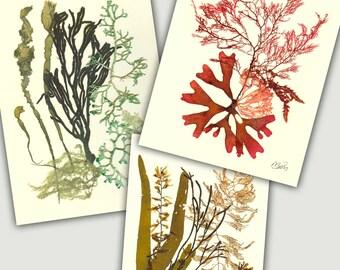Seaweed art, Pressed seaweed, MADE TO ORDER, Set 3 seaweed pressings, kelp, Botanical seaweed artwork, beach cottage, nautical decor, 8x10