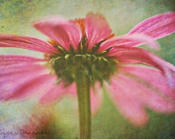 Macro Flower Photography - Rainbow Echinacea - 10 x 14 fine art print - pink purple green colorful coneflower surreal wall art home decor