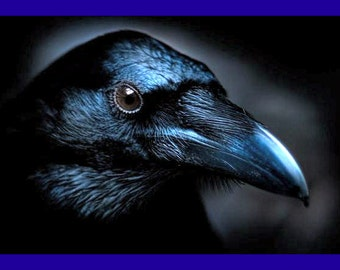 Totem Animal - Psychic Reading