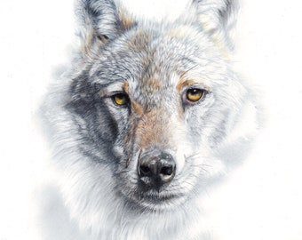 Fade To Grey - LARGE CANVAS wolf Print - Grey Wolf -  by Peter Williams -  ready to hang.
