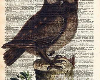 Owl Bird Art Print - Vintage Book Print - Upcycled Recycled Book Print - Natural History Bird Illustration - Woodland Animal Bird Art