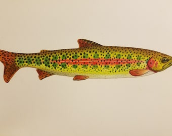 """SMALL 8.5x11"""" Rainbow Trout Parr limited edition print"""