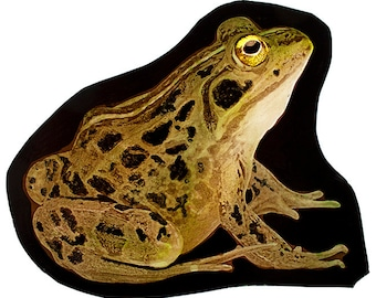 Frog stained glass fragment, kilnfired, stained glass frog, frog suncatcher, frog glass fragment, grenouille vitraux, رنگ آمیزی شیشه ای