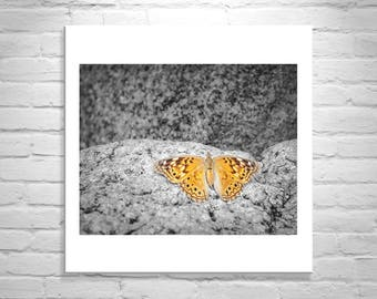 Butterfly Picture, Butterfly Art, Insect Art, Butterfly Photography, Golden Butterfly Art, Butterfly Print, Butterfly Wall Decor