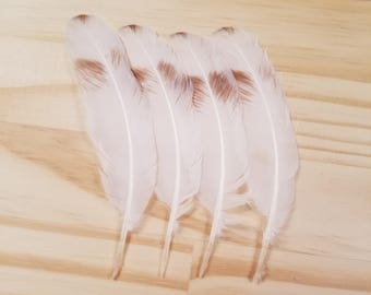 Brown Pigeon Feathers Cruelty Free Humane Naturally Molted Real Feathers #a63