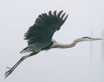 Crane takes flight in Rockport Texas