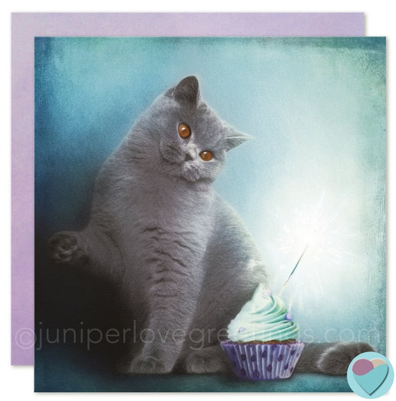 Birthday Cards Cat Kitten Lovers British Shorthair BLANK