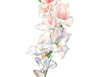 Gladiolus watercolour painting print G17117, A4 size print, Gladiolus watercolor painting print, Gladiolus print of watercolor painting
