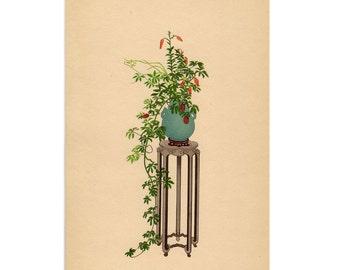 1935 IKEBANA JAPANESE FLOWER arrangement print original vintage botanical lithograph - tiger lily & hexaphyll and pampas grass flowers