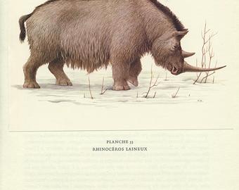 Woolly rhino print 1970 Vintage rhinoceros print vintage animal art vintage exctinct mammal art Rhino gift historian Extinct animal poster