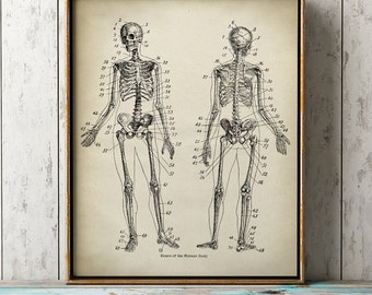 Human Anatomy print, skeleton poster, bones,  medical wall art, doctor gift, anatomy poster, anatomy print, home decor
