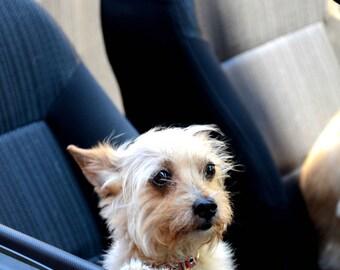 dog photograph - dog photography - original photography prints