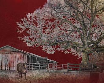 Red Sky Farm