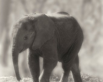 Baby Elephant Photograph Nature Photography Baby Animal Sepia Wildlife Photography Safari Photo Baby Elephant Elephant Decor Girl Room Decor