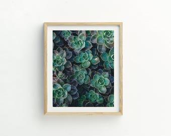 Succulent Print |  Succulent Printable Art |  Instant Download |  Succulent Photography | Succulent Art | Plant photograph | Cacti Art