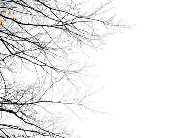 Tree Print, Minimalist Large Wall Art, Tree Branches, Yellow Autumn Leaves, Fall Decor, Home Decor, Black and White, Yellow, Tree Print