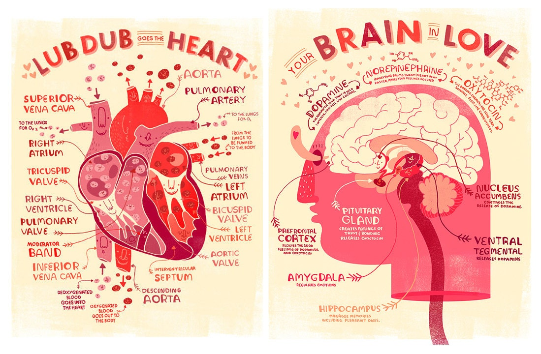 Valentine\'s Heart and Brain Anatomy Poster DEAL