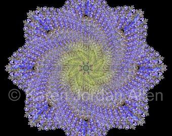 "Mandala Art Card or Print ~ Blue Salvia flower mandala design ~ Abstract nature photo ~ 5.25""x5.25"" note card or 5""x5"" print"