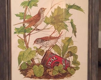 Vintage Bird Prints By R. Dorman