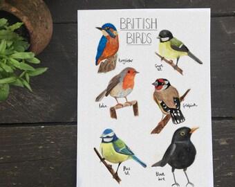 British Birds   A4 Print