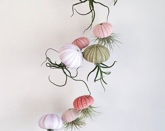 3 Air Plant Jellyfish / Hanging Air Plants / Air Plant Holder / Hanging  Planter /