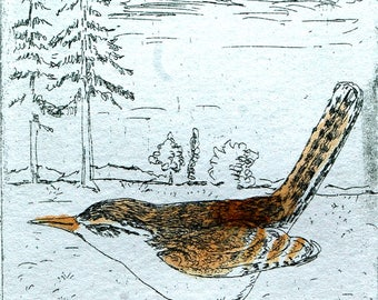 Wren Bird, Wall Art and Home Decor, Nature: a hand pulled etching, limited edition print in green