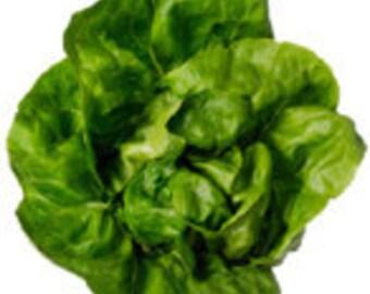"Heirloom Lettuce Seeds - ""Buttercrunch"""