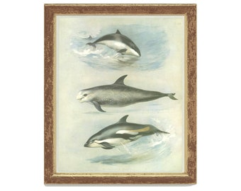 Porpoise, Risso's Grampus, White-Sided Dolphin, Vintage Print, Thorburn Painting 1979/49, Natural History, Woodland, Frameable Art