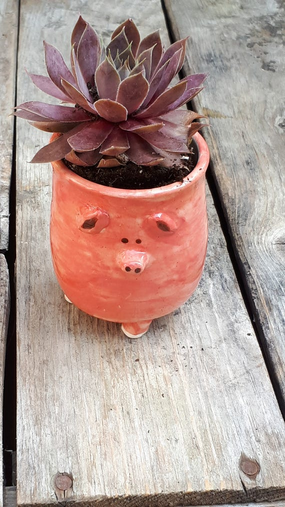 Pottery pink pig blokhead modern catch all  boho perfect for airplants or succulents great  gift