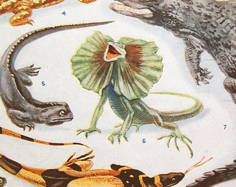 Vintage Art Print Reptiles of Many Lands from the 1926 Childrens Encyclopedia Back and Front Pages Lizard Alligator Color Prints.