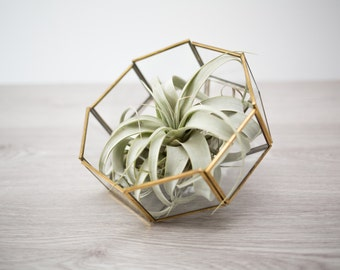 FREE SHIPPING - Air Plant Terrarium Upcycled from Vintage Lampshade / Geometric Octagon Gold Metal and Glass Succulent Plant Holder