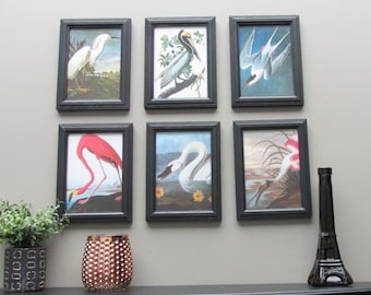 wall gallery - wall collage - Audubon Collection- a 6 piece framed wall art collection