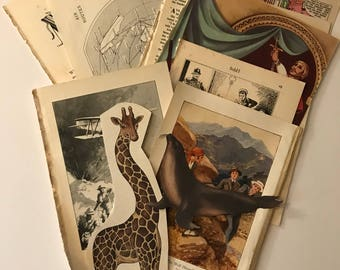 Selection pack of vintage book pages  plus cut out animals