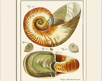 Nautilus Shell Print, Plate 137, Art Print with Mat, Note Card, Natural History, Wall Art, Nautical Art, Sea Life Print, Costal Decor