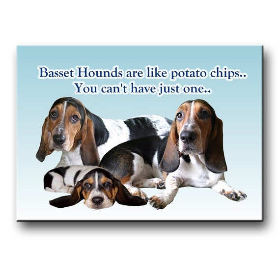 Basset Hound Can't Have Just One Fridge Magnet