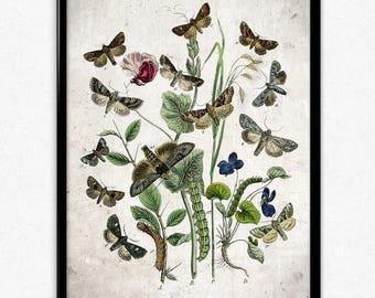 Butterflies Garden Vintage Print 2 - Butterflies Poster - Butterfly Art - Butterfly Picture - Home Decor - Home Art - Kitchen - Kitchen Art