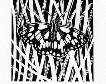 Marbled White Butterfly Linocut Print Limited Edition