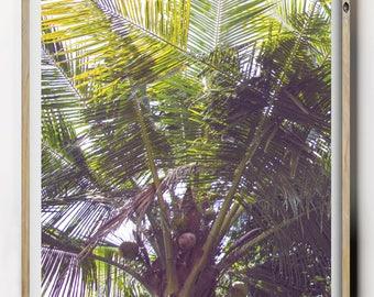 Palm Tree Print, Beach Photography, Green Palm Tree, Summer Print, Tropical Print