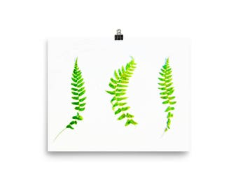 Pretty little ferns