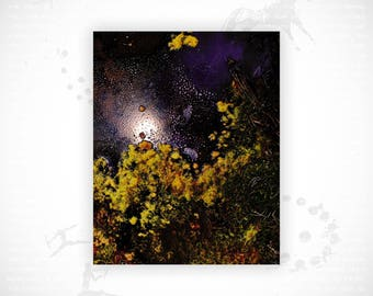 Limited Edition Fine Art Print | Afterglow #4
