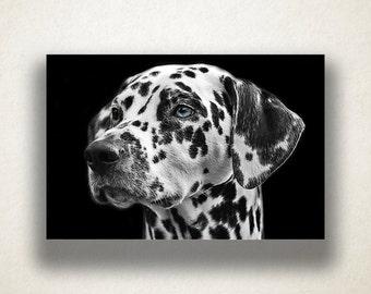 Dalmatian Portrait Canvas Art, Dog Wall Art, Animal Canvas Print, Close Up Wall Art, Photograph, Canvas Print, Home Art, Wall Art Canvas