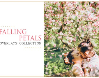12 Falling Petals Photoshop Overlays PNG: St. Valentine's Day Rose Flower Photo Effect Layer, Digital Backdrops, Romantic Effect