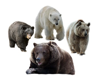 Bear overlay photo animal photoshop png