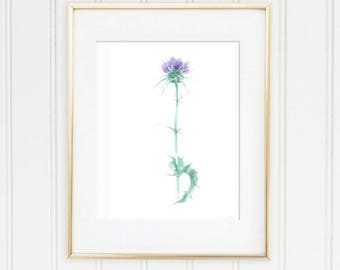 watercolor Thistle, Thistle print, lilac watercolor flower, celtic Thistle, Thistle Botanical Print, Purple flower Print, wildflower print